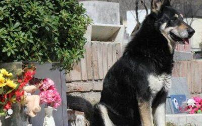 Los perros, fieles hasta la muerte; Capitán, el perro vigila.