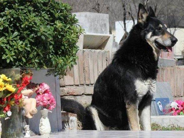 La increíble historia de capitán, el perro vigila