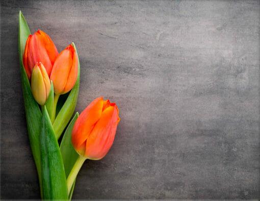 Lápida ColorFull Tulipanes verdes 1899