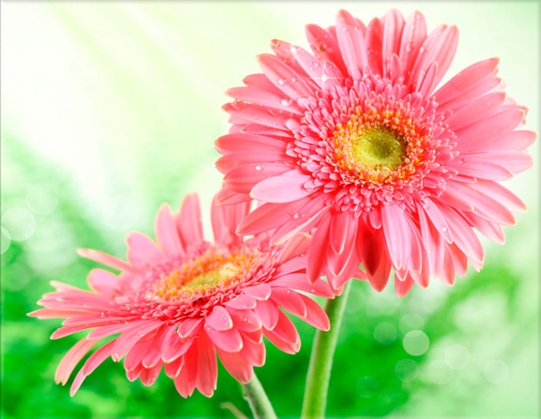 Lápida ColorFull margaritas rosas 3951
