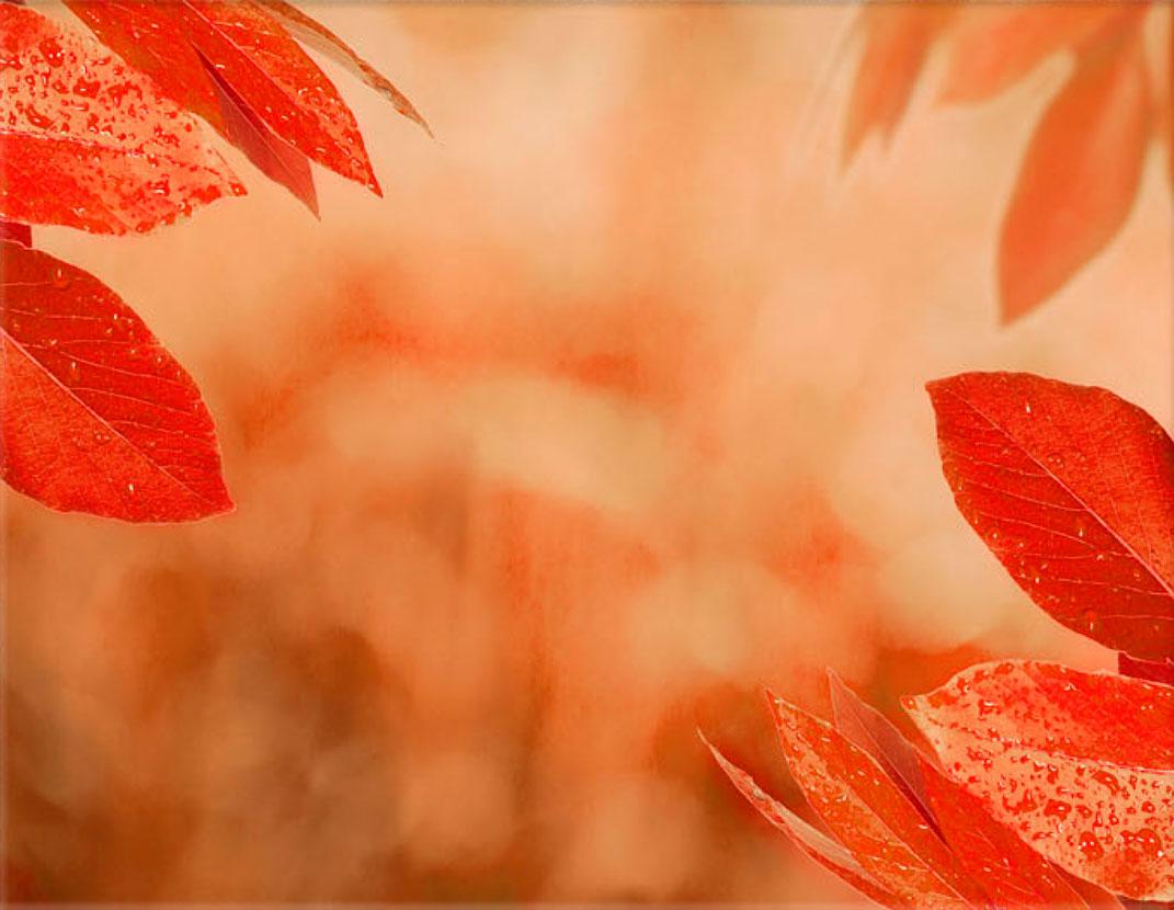 Lápida ColorFull hojas con rocio 5327