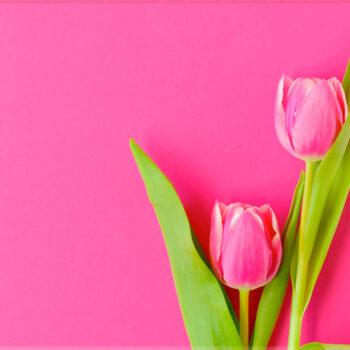 Lápida ColorFull Tulipán rosa 6833